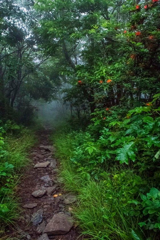 The Path Taken ~ Ann Richardson