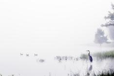 Six Ducks ~ William Hobbs