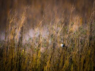 Bird on Sea Oats,AWood_Art3