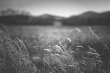 Bells Bend ~ Jo Fields