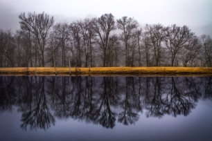 BAre trees reflected in a pond or lake devided by a golden strip of land.