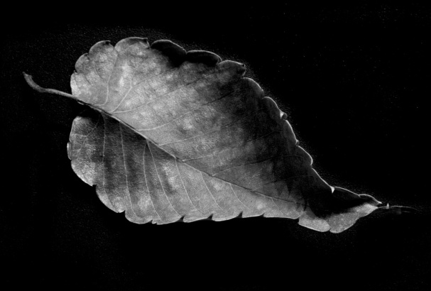 A Leaf - Durwood Edwards