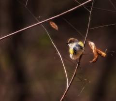 Bird in Triangle ~ Al Wood
