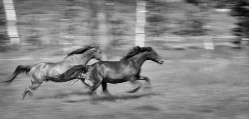 Born to Run, by Renee Lowery
