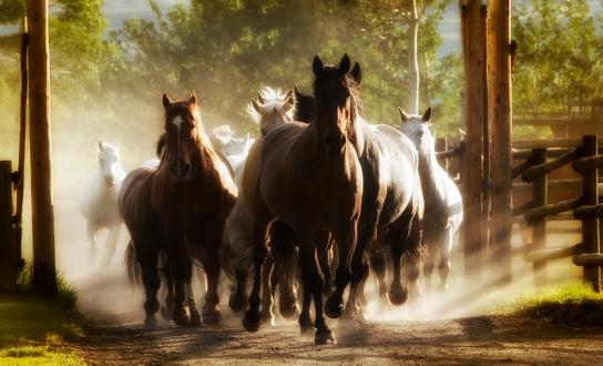 Equus, by Renee Lowery