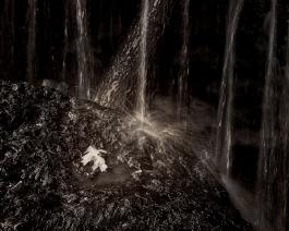 Lone Leaf, by Rick Borchert