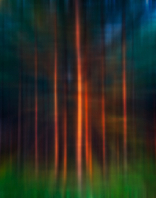 Morning in the Pines, by Rick Borchert