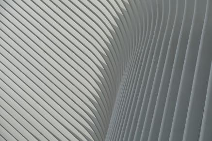 Oculus, Dove in Flight, by Emily Passino