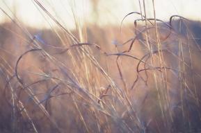 Windswept, by Jo Fields