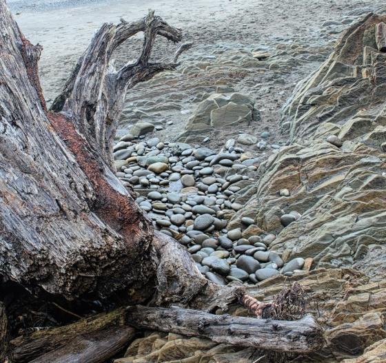 Durwood Edwards - Starfish Point, WA