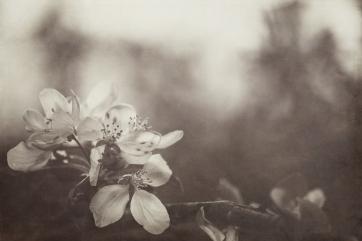 Jo Fields - Faded Blossoms