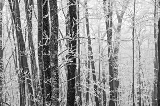Robin Conover - Hoarfrost, Roan Mountain