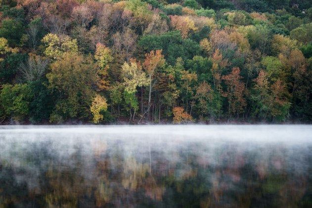 David L. Morel, Foggy Morning at Radnor Lake